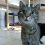katzenauslauf-netzschkau-tigerchen-150x150 Bitte lasst uns nach draussen - Katzengehege für ansteckende Katzen