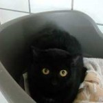 katzenauslauf-netzschkau-tilli-150x150 Bitte lasst uns nach draussen - Katzengehege für ansteckende Katzen