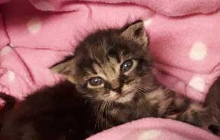 katzenbaby-02-maennlich-wollaberg 5 Kitten aus Wollaberg suchen einen Start-ins-Leben Paten