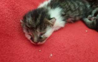 katzenbaby-03-maennlich-wollaberg 5 Kitten aus Wollaberg suchen einen Start-ins-Leben Paten