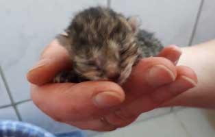 katzenbaby-03-weiblich-start-ins-leben-patenschaft-dorf Katzenstation Freising