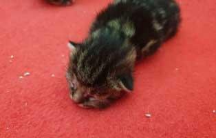 katzenbaby-04-maennlich-wollaberg 5 Kitten aus Wollaberg suchen einen Start-ins-Leben Paten