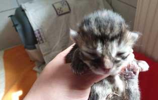 katzenbaby-05-weiblich-wollaberg 5 Kitten aus Wollaberg suchen einen Start-ins-Leben Paten