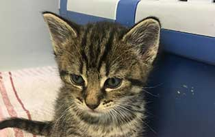 katzenbaby-07-weiblich-bueckeburg 11 Kitten aus Bückeburg suchen einen Start-ins-Leben Paten