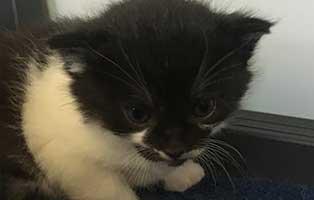 katzenbaby-15-maennlich-bueckeburg 11 Kitten aus Bückeburg suchen einen Start-ins-Leben Paten