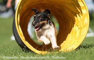 ratgeber-hunde-spass Hunderatgeber