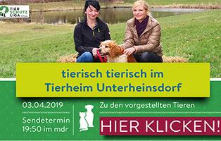 tierisch-tierisch-beitrag Aktuelles - Tierheim Unterheinsdorf