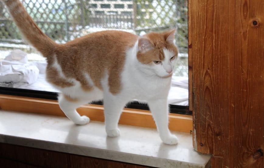 Dreibein-Cooper-bei-seiner-Lieblingsbeschäftigung Was ist eine Tier-Patenschaft