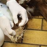 animal-hording-beschlagnahmungen-hund-pfote-150x150 Animal Hoarding