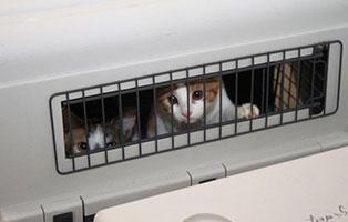animal hording beschlagnahmungen katze gitter