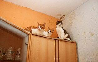 animal hording beschlagnahmungen katzen schrank