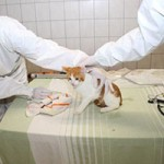 animal-hording-beschlagnahmungen-tierschutzliga-dorf-untersuchung-150x150 Animal Hoarding