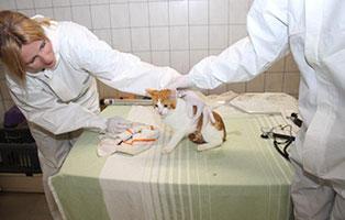 animal-hording-beschlagnahmungen-tierschutzliga-dorf-untersuchung Tierpfleger/in, auch Quereinsteiger, gesucht!