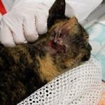 animal-hording-beschlagnahmungen-verletzt-150x150 Animal Hoarding