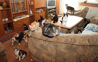 animal-hording-beschlagnahmungen-wohnzimmer Fundkater sucht Start-ins-Leben-Paten