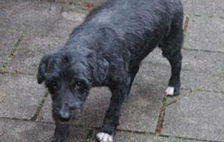 blacky-katzenstation-muenchen-dement Hunde-Rentnergang