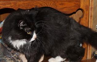 chicco-katzenstation-muenchen-agressiv Katzen-Seniorengruppe