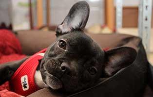 gluecklich-vermittelt-bruno Glücklich vermittelt - Tiere haben ein Zuhause