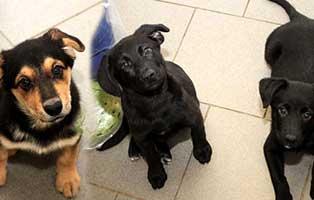 gluecklich-vermittelt-drei-welpen 3 Hundekinder