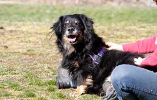 gluecklich-vermittelt-scooby Glücklich vermittelt - Tiere haben ein Zuhause
