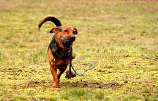gluecklich-vermittelt-timmi Glücklich vermittelt - Tiere haben ein Zuhause