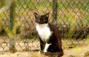 gluecklich-vermittelt-willbour Glücklich vermittelt - Tiere haben ein Zuhause