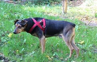 hund champi patentier muenchen