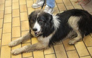 hund-fliesen-liegt Animal Hoarding