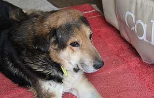 hund zeuss rentnergang muenchen teppich