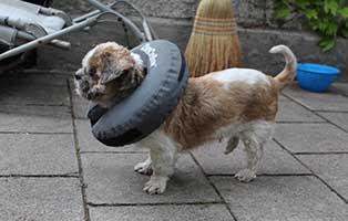 hunderentner-muenchen-esmeralda Hunde-Rentnergang