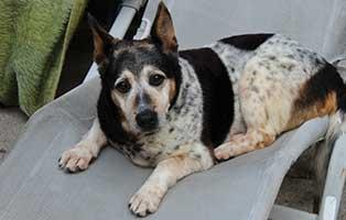 hunderentner-muenchen-jacomo Hunde-Rentnergang