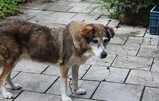 hunderentner-muenchen-kira Hunde-Rentnergang