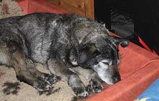 hunderentner-muenchen-kurt-verstorben Trauriges - wenn ein Tier die Regenbogenbrücke überquert