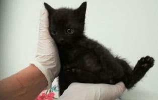 katzenbaby-HK101_19-thueringen-start-ins-leben 5 Katzenbabys aus Thüringen suchen einen Start-ins-Leben Paten