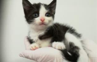 katzenbaby-HK99_19-thueringen-start-ins-leben 5 Katzenbabys aus Thüringen suchen einen Start-ins-Leben Paten
