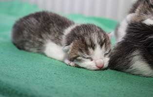 katzenbaby-SK204-maennlich 4 Katzenbabys aus Spremberg suchen Start-ins-Leben Paten