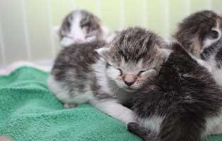 katzenbaby-SK205-weiblich Start-ins-Leben-Patenschaft