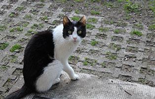 katzensenioren-muenchen-marvina Katzen-Seniorengruppe
