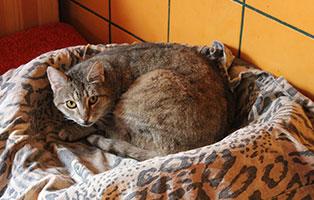 katzensenioren-muenchen-rosi Katzen-Seniorengruppe