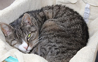 katzensenioren-muenchen-tom Katzen-Seniorengruppe