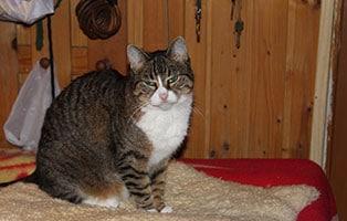 katzensenioren-muenchen-tristona Katzen-Seniorengruppe