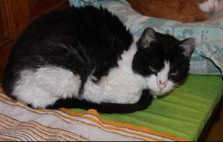 marvina-katzenstation-muenchen-verstorben Katzen-Seniorengruppe