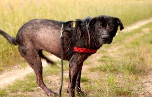 ratgeber-hunde-allergie Hunderatgeber
