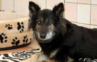 ratgeber-hunde-alte Ein Tierheimhund zieht ein