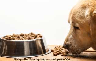 ratgeber-hunde-kaltgepresstes-trockenfutter Hunderatgeber