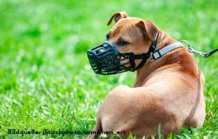 ratgeber-hunde-maulkorb Ein Tierheimhund zieht ein