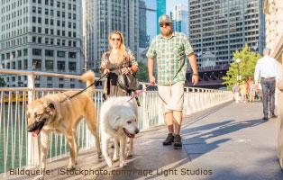 ratgeber-hunde-stadt Einen Hund in der Stadt halten
