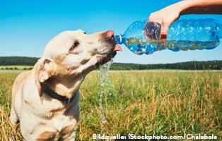 ratgeber-hunde-wasserbedarf Kleintierratgeber