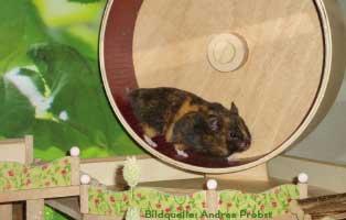 ratgeber-kleintiere-hamster-rad Wildvögel ganzjährig füttern