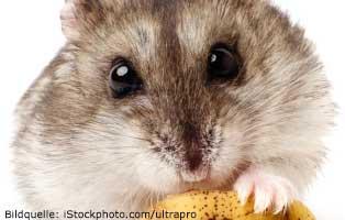 ratgeber-kleintiere-hamster Kleintierratgeber